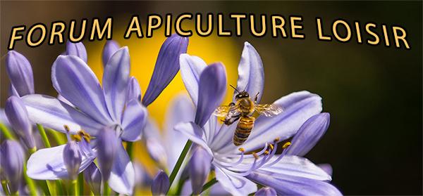 Forum d'apiculture de loisir