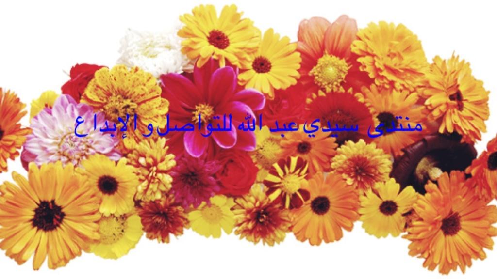 منتدى سيدي عبد الله للتواصل و الابداع