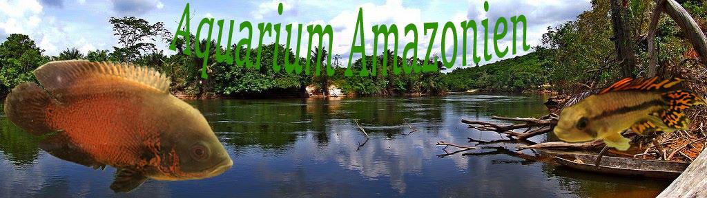 Aquariophilie Amazonien