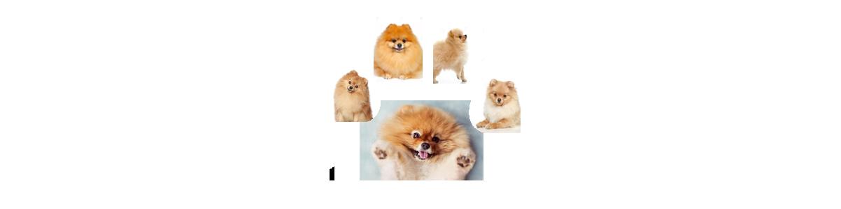 Pomeranias Pasión