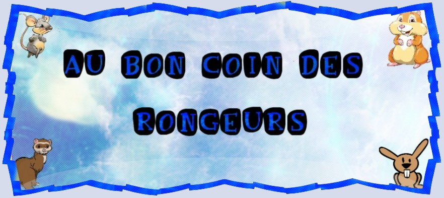 Au Bon Coin Des Rongeurs